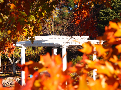 White Pergola and Fall Color